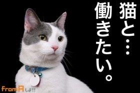 猫 バイト レジネコ ねこ ネコ ペットショップ 猫カフェ フロム・エー フロムエー